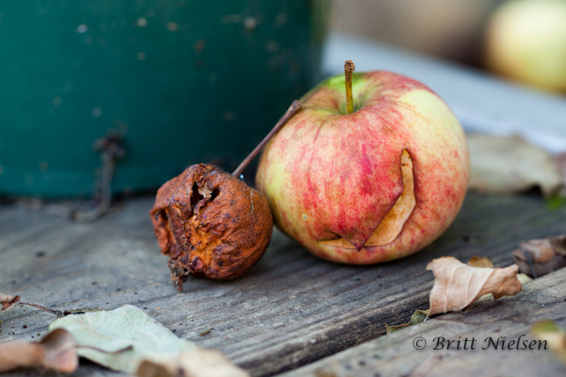 Two Apples  ©Britt Nielsen