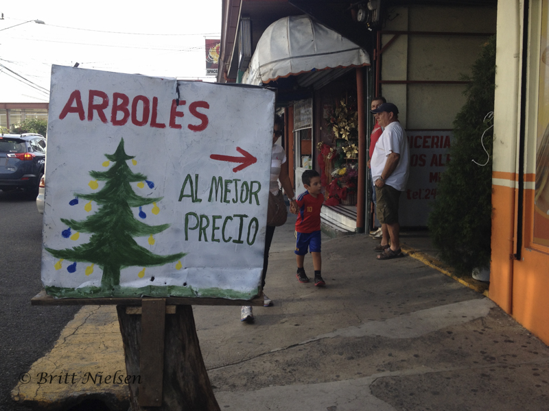 Christmas Trees for Sale--at the best prices