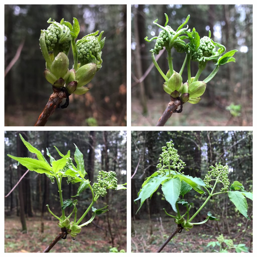 From Bud to Blossom